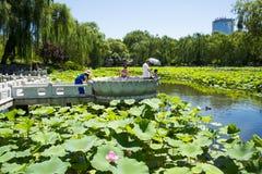 Asia China, Beijing, Zizhuyuan Park,Lotus pond in summer, Royalty Free Stock Image