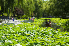 Asia China, Beijing, Zizhuyuan Park,Lotus pond in summer, Royalty Free Stock Photography