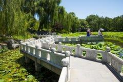 Asia China, Beijing, Zizhuyuan Park,Lotus pond in summer, Royalty Free Stock Photo