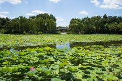 Asia China, Beijing, Zizhuyuan Park,Lotus Pool in Summer Stock Images