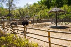 Asia China, Pekín, Daxing, parque animal salvaje, ¼ Œ de Landscapeï del parque Fotos de archivo libres de regalías