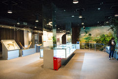 Asia China, Pekín, museo geológico, sala de exposiciones interior Fotografía de archivo libre de regalías