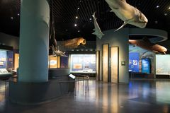 Asia China, Tianjin Museum of natural history, marine biological scene stock photography