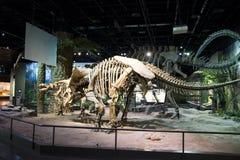 Asia China, Tianjin Museum of natural history, dinosaur skeleton stock photo