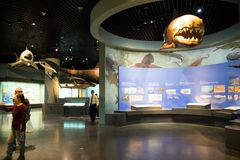 Asia China, Tianjin Museum of natural history, marine biological scene royalty free stock photos