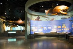 Asia China, Tianjin Museum of natural history, marine biological scene royalty free stock image