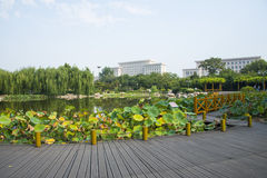 Asia China, Wuqing Tianjin, cultural park, The lotus pond, wooden pavilion Royalty Free Stock Photos