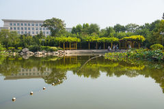 Asia China, Wuqing Tianjin, cultural park, The lotus pond, wooden pavilion Royalty Free Stock Images