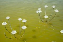 Asia China, Wuqing, Tianjin, expo verde, lámpara de Lotus Foto de archivo libre de regalías