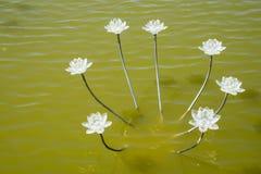 Asia China, Wuqing, Tianjin, expo verde, lámpara de Lotus Fotografía de archivo libre de regalías