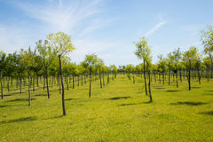 Asia China, Wuqing, Tianjin, Green Expo,Ecological forest Stock Image