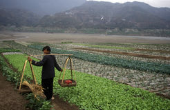 ASIA CHINA YANGZI RIVER. Agroculture in the village of fengjie at the yangzee river in the three gorges valley up of the three gorges dam project in the province Royalty Free Stock Photos