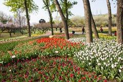 Asia Chinese, Beijing botanical garden, flower garden, Royalty Free Stock Images
