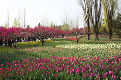 Asia Chinese, Beijing botanical garden,In the spring, gardening, flowers Royalty Free Stock Images
