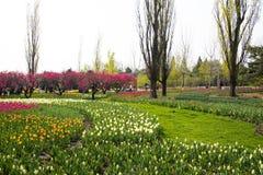 Asia Chinese, Beijing botanical garden,In the spring, gardening, flowers Royalty Free Stock Photo
