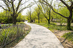 Asia Chinese, Beijing botanical garden,Spring scenery,The wooden fence, path, trees Stock Image