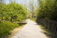 Asia Chinese, Beijing botanical garden,Spring scenery,The wooden fence, path, trees Royalty Free Stock Images