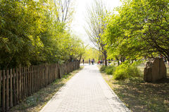 Asia Chinese, Beijing botanical garden,Spring scenery,The wooden fence, path, trees Stock Photos