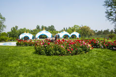Asia Chinese, Beijing, Garden Expo,Landscape architecture, Mongolia package,Rose in full bloom Royalty Free Stock Image