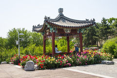 Asia Chinese, Beijing, Garden Expo, The pavilion, rose flowers Royalty Free Stock Photos