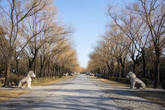 Asia Chinese, Beijing, Ming Dynasty Tombs, God Road, early spring landscape Stock Photography