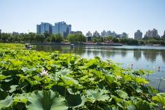 In Asia, cinese, parco di Pechino, stagno di loto, stagno di loto, architettura moderna Fotografia Stock
