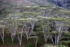 ASIA EAST TIMOR TIMOR LESTE FOREST LANDSCAPE Stock Image