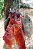 ASIA EAST TIMOR TIMOR LESTE JACO ISLAND Royalty Free Stock Images