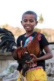 ASIA EAST TIMOR TIMOR LESTE SAME COCK FIGHT Royalty Free Stock Image