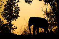 Asia elephant in the forest Stock Photography
