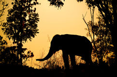 Asia elephant in the forest Stock Photos