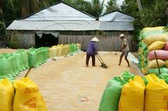 Asia farmer, dry rice, paddy bag, storage Royalty Free Stock Image