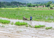 Asia Farmer using tiller tractor in rice field Stock Images