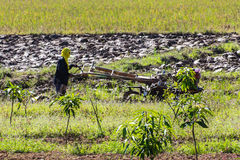 Asia Farmer using tiller tractor in rice field Stock Photography