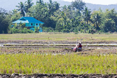 Asia Farmer using tiller tractor in rice field Royalty Free Stock Photography