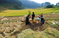 Asia farmers working on terraced rice fields Stock Photos