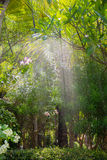 Asia garden with sprinkler spraying water Stock Photography