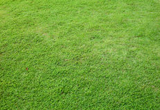 Asia Green grass background Stock Photos