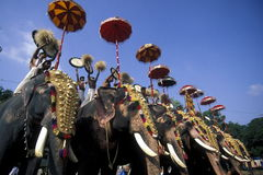ASIA INDIA KERALA. The Elephants at the Pooram Festival in Thrissur in the province of Kerala in India Royalty Free Stock Photos