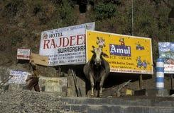 ASIA INDIA RISHIKESH Royalty Free Stock Image