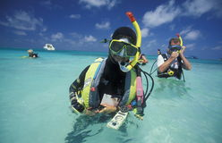 ASIA INDIAN OCEAN MALDIVES DIVING Royalty Free Stock Photo