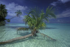ASIA INDIAN OCEAN MALDIVES SEASCAPE BEACH Royalty Free Stock Image