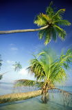 ASIA INDIAN OCEAN MALDIVES SEASCAPE BEACH Royalty Free Stock Photography