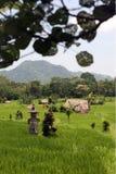 ASIA INDONESIA BALI LANDSCAPE RICEFIELD Stock Photo