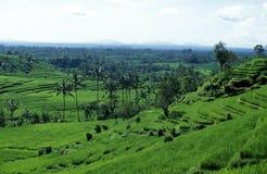 ASIA INDONESIA BALI RICE TERRACE UBUD TEGALLALANG Royalty Free Stock Photography