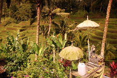 ASIA INDONESIA BALI RICE TERRACE UBUD TEGALLALANG Royalty Free Stock Photos