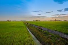Asia, Indonesia, Tailandia, visión aérea, campo agrícola imágenes de archivo libres de regalías