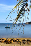 Asia in  kho   thailand bay      pirogue palm Royalty Free Stock Photography