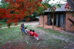 Asia kid, summertime, Vietnamese children Royalty Free Stock Images