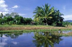 ASIA MALAYSIA LANGKAWI Stock Photo